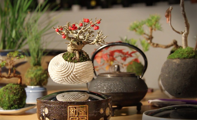 air_bonsai1