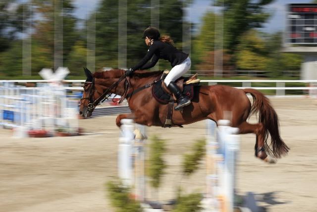 馬術障害飛越競技